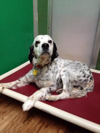 Pre-Boarding for elderly dogs