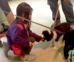 Puppy getting treats from a little girl.