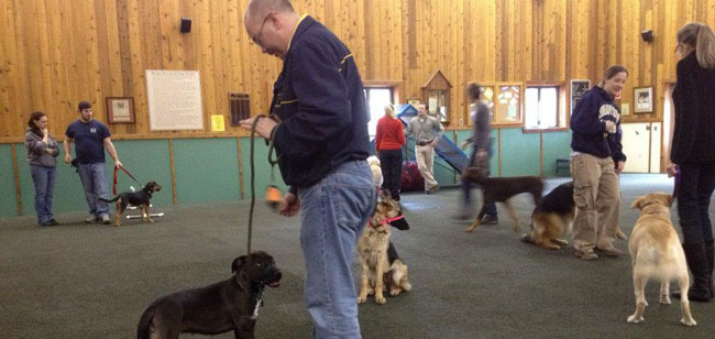 Level I Dog Training Class