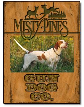 Bird Dog Training at Misty Pines Gun Dog Company